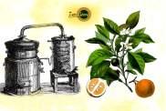Acqua/Idrolato di Fiori D'Arancio Bio