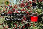 Macerato Glicerico di Biancospino (giovani getti)