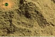 Alga laminaria Tallo polvere