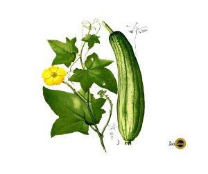 Spugna vegetale Luffa Cylindrica 3 pezzi