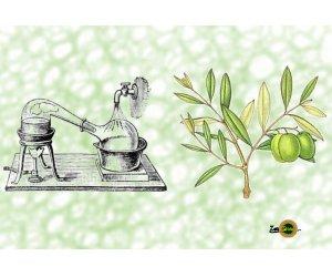idrolato di foglie d'olivo