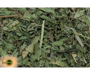 Verbena citriodora