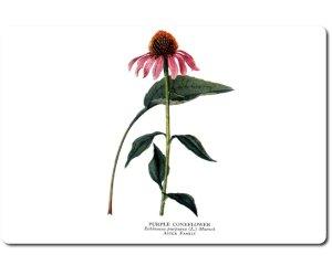 Echinacea Rossa Radice triturata